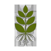 Цельные растения